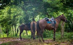 Resting horses Stock Image