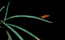 Resting hover fly. Close up of a hover fly resting on leaf stock photo