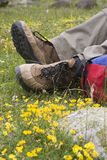 Resting on a meadow Stock Photos