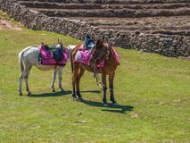Resting mules Royalty Free Stock Photography