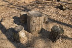 Resting place in the forest in the form of tree stumps stock photo