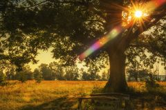 Resting place under a mighty oak tree. The rays of the sun through the branches of a tree.n stock photo