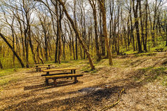 Resting place in the woods. Spring royalty free stock photo