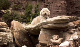 Resting on Rock Slabs Stock Image