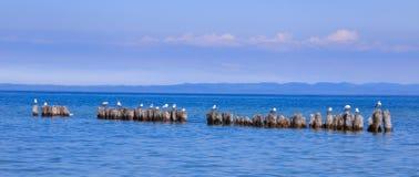 Resting Sea Gulls In Lake Superior Stock Photos