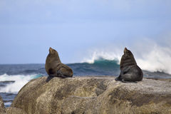 Resting seals Royalty Free Stock Photos