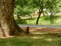 Resting in the shade. A monkey under the shade of a tree in the town of Anuradhapura, Sri Lanka stock photo