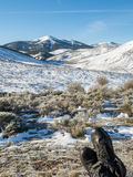 Resting in snowy mountains in Spain Stock Images