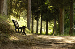 Resting Spot. On a forrest walk Royalty Free Stock Image