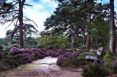 Resting spot in heathland Stock Photography