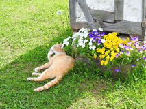 Resting tabby cat Royalty Free Stock Photo