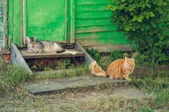 Resting two quiet cat near wooden green door Royalty Free Stock Photo
