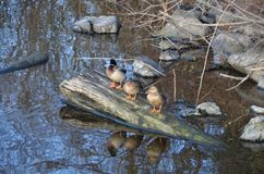 RestingAt de la huésped de Kenmore el lago Imagen de archivo