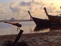 Restion λιβελλουλών στην παραλία Στοκ φωτογραφία με δικαίωμα ελεύθερης χρήσης