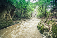 Restless river flowing through the forest. Of Cheile Nerei national park, Romania stock photos