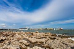 Restna av många skal på stenarna Fotografering för Bildbyråer