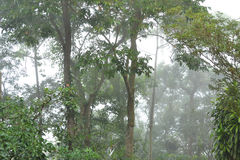 Resto atlântico da floresta na névoa fotos de stock