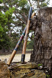 Resto australiano de los didgeridoos contra tocón masivo Imagen de archivo