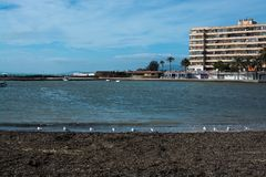 Resto das gaivotas na praia do inverno Foto de Stock