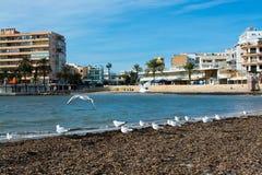 Resto das gaivotas na praia do inverno Imagens de Stock