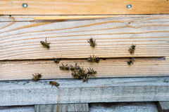 Resto de las abejas en las cajas de la abeja Imagen de archivo libre de regalías