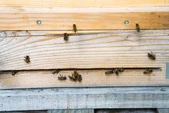 Resto de las abejas en las cajas de la abeja Imagen de archivo