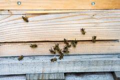Resto de las abejas en las cajas de la abeja Fotos de archivo