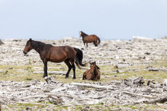 Resto de los caballos Fotografía de archivo libre de regalías