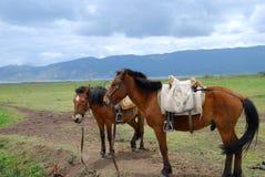 Resto de los caballos en prado Fotos de archivo libres de regalías