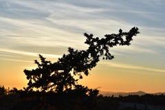 Resto de los pájaros en una rama en la puesta del sol Fotos de archivo