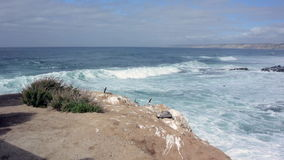 Resto de los pelícanos en rocas sobre ondas que se estrellan almacen de video