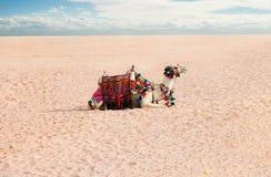 Resto del camello en desierto Imagen de archivo