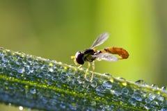 Resto del insecto en la hoja Imágenes de archivo libres de regalías