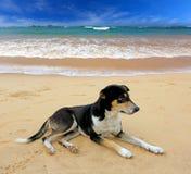 Resto del perro en la playa del océano Foto de archivo libre de regalías