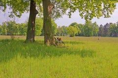 Resto del verano en el parque de Sanssouci Fotos de archivo
