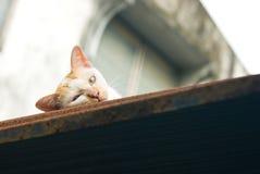 Resto do gato na parte superior do telhado Fotos de Stock