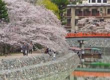 Resto do ` s dos povos pelo rio de Uji que olha a flor de cerejeira com paisagem bonita imagem de stock royalty free