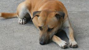 Resto dos cães em ruas da cidade video estoque