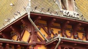 Resto dos pombos no telhado de filme