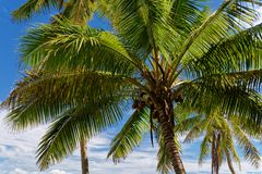 Resto e rilassamento in questo paradiso tropicale sotto il cielo blu ed i cocchi fotografie stock libere da diritti