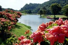 Resto en Borneo Fotografía de archivo