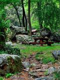Resto en el bosque Imagen de archivo libre de regalías