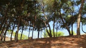 Resto en el bosque en un día soleado Sonidos de cigarras almacen de video