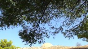 Resto en la sombra de pinos Sonidos de cigarras almacen de metraje de vídeo