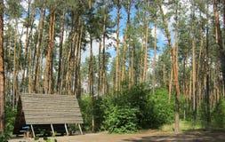 Resto en un bosque del pino Foto de archivo
