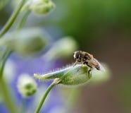 Resto en una flor Imagen de archivo