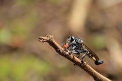Resto indefinido del insecto, de la avispa, de la mosca o de la hormiga del vuelo en el tronco, Nicaragua Imagenes de archivo