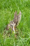 Resto Rotting de uma árvore fotografia de stock royalty free