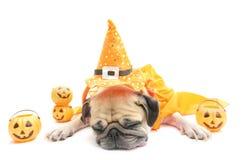 Resto sveglio di sonno del cane del carlino con il costume felice di giorno di Halloween immagini stock libere da diritti