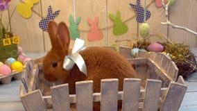 Resto tradicional del concepto del símbolo del conejo de la celebración mullida de pascua en una cerca de madera almacen de metraje de vídeo